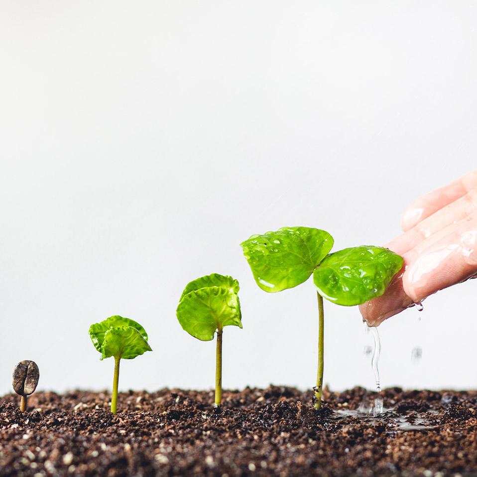 vision Holistique Coaching Transformationnel